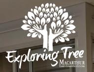 Exploring Tree Macarthur